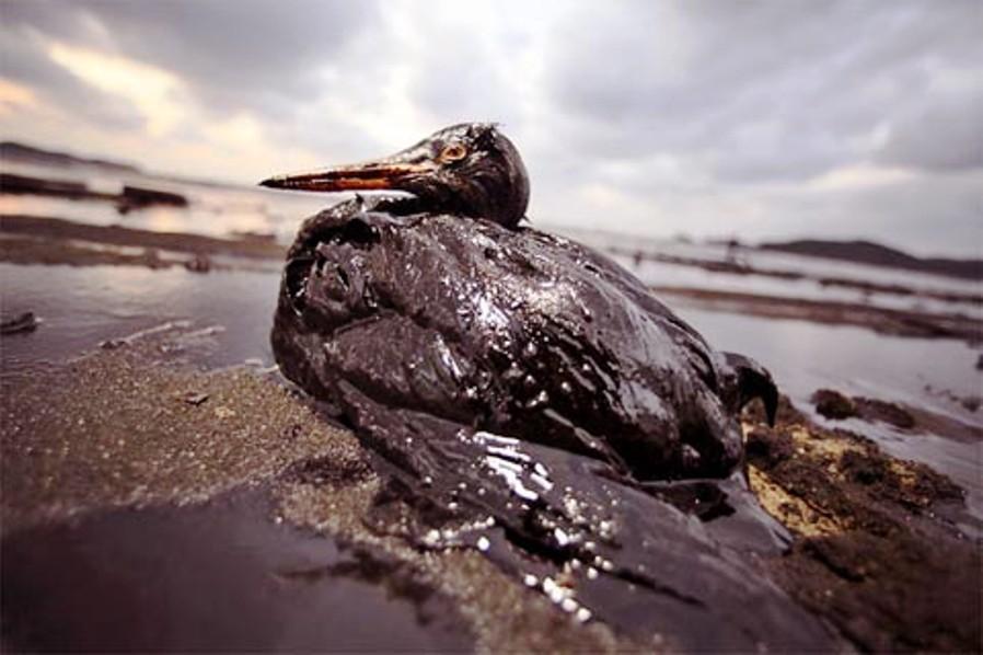 原油漏れによる被害者